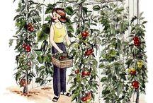 gardening / by Muriel Tanner