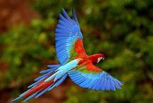 ANIMAL ● Parrot