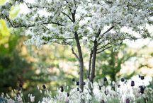 Plantering // vår