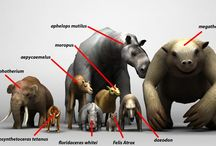prehistoric animals and tools and arts and people