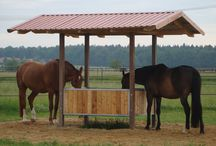 Utegang hest / Ideer til smarte løsninger for holde hest på utegang.