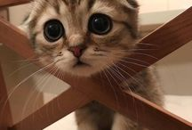 Søtte katter