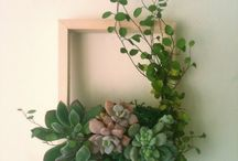Succulents and green plants