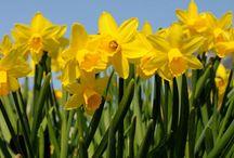 Spring's Favorite Blooming Plants