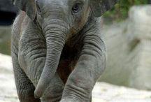 Elephants / by Wendy Nack