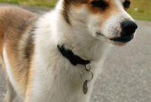 Honden en katten en andere beestjes