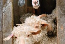 Lovely farm animals