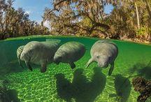 My Florida / by Ellen Walker