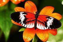 Animals Butterflies