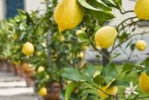 Details:: Grow Your Own / Fresh flavors and food ideas.