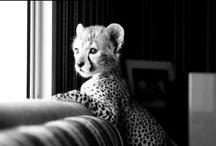 The cutest animals!