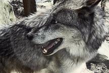 Wolf And I / My Favorite Fairytale / by FreeKLR NUrF8z