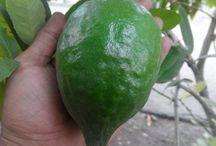 lime (green lemon) and home energy