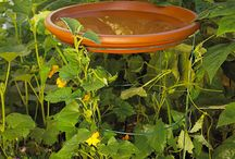 Gardening & Outdoor / by Patty Harmes Lee