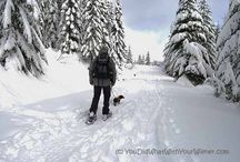 Snow Shoeing / Tips, gear and trails for snow shoeing.