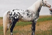 Horses/Unusual colour
