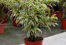 Plantas para Jardins internos.