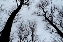 See My Trees / by Evonne Benedict