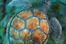 Sea creatures / These creatures are the most beautiful in the sea