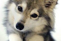 dogs/koira + askartelu