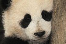 Animals - Zoos and Aquariums / Zoos, aquariums, nature