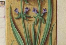 Régi festett képek,Gyógyvirágokról.