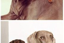 Ζώα και κατοικίδια