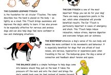 Dog Infographics / The dog in infographics. #dogs #infographics