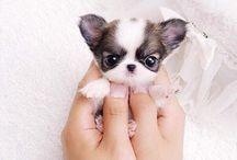 Doggie I want
