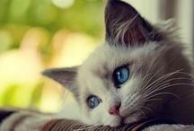 Cute photos