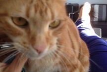 Gato / Animales