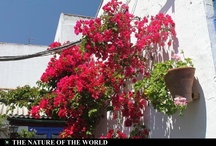 Balcony Flower Festival in Cordoba