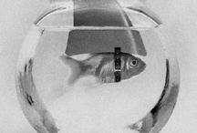 Fishy Fishy Fish / by Lesley West
