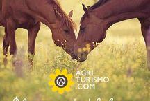 Attività in Agriturismo - Equitazione / Cosa c'é di più bello che fare delle passeggiat immersi nella natura ?! Farle accompagnati da amici speciali: i nostri cavalli !! E allora che aspetti ?! Salta in sella, si parte !! #agriturismo #cavalli #farmhouses #horses #equitazione #natura #nature #trekking  http://agriturismo.com/leggiAgriturismi.asp?idLingua=1&landing=10