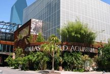 Dallas Attractions