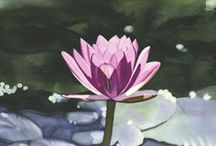 Painting Waterlilies and Lotus / by Francoise Chauray