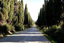 """Bolgheri : the magic of eating and drinking well / Bolgheri is so near the sea, and the Gulf of Baratti, that you can breath it in the air. It welcomes the visitor with the double row of beautiful cypresses of a long avenue made famous by the poet and Nobel Laureate Carducci. The """"borgo"""" itself, though small, swarms with wine cellars, taverns, and boutiques."""