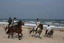 Lübecker Bucht dein Pferde-Strand / Pferde am Strand in Scharbeutz, Sierksdorf und Neustadt in Holstein