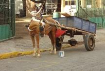Leon / Leon najdeme v Nikaragui.