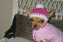 All Things Chihuahua!! / by Jessica W. Lawrence