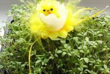Wielkanoc / Wesołych Świąt