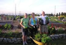 Ladner Community Garden / by That Bloomin Garden