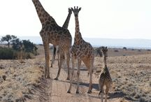 Highlights of Namibie