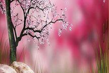 PINKNESS / by Elizabeth Bell