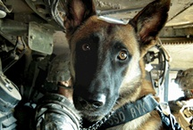 OPERATION MILITARY CARE K-9 / Our support mission that provides care packages of medical supplies and care & comfort items that are shipped overseas to our troops.   Currently the organization supports over 5000 Military Working Dog and Handler Teams, most of whom are currently deployed. Our goal is to make sure that no dog/handler team will suffer injury or loss due to the lack of needed supplies.