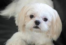 Cães Diversidade de Raças / Várias Raças e Cães belíssimos / by Adailze