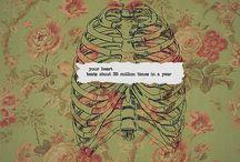 i am. you are. anatomy