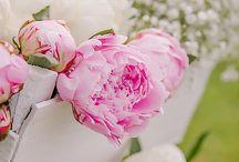 Svatební květiny / Wedding flowers