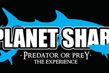 Planet Shark: Predator or Prey / Whether sharks fill you with fear or fascination, Planet Shark: Predator or Prey will have you hooked from start to finish. Leave the outside world behind as you dive into the incredible underwater world of sharks – without even getting your feet wet. Trace millions of years of evolution, come face-to-face with the great white shark, learn the true impact of the shark fin trade and gain a whole new level of respect for the ocean's oldest and most effective predator.