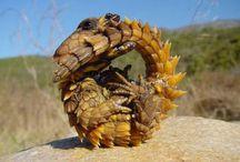 爬虫類が好き